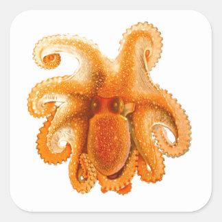 Octopus No 5 Cephalopod Sea Creature Art Square Sticker