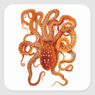 Octopus No 6 Cephalopod Sea Creature Art Stickers