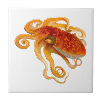 Octopus No.8 Cephalopod Sea Creature Art Ceramic Tile