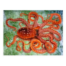 Octopus Ocean Vintage Postcard