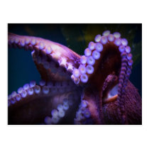 Octopus Postcard and Notecard