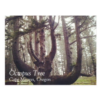 Octopus Tree, Cape Meares Postcard