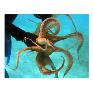 Octopus underwater postcard