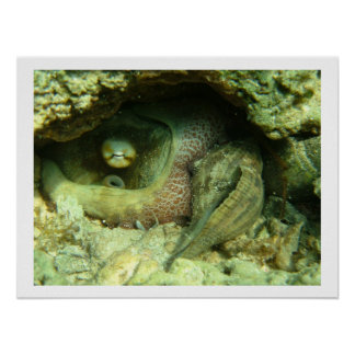 Octopus vulgaris poster