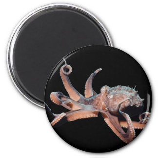 Octopus-Wild Thang 2 Inch Round Magnet