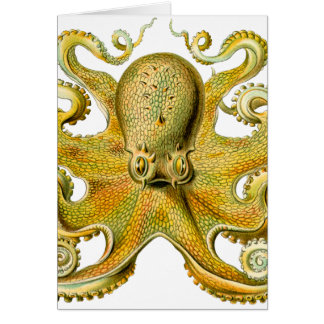 Octopus Yellow Card