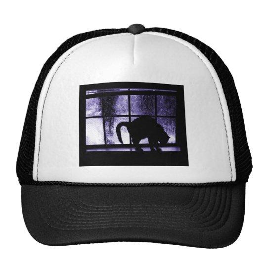 Octubre riega la silueta del gato en el añil de la gorra