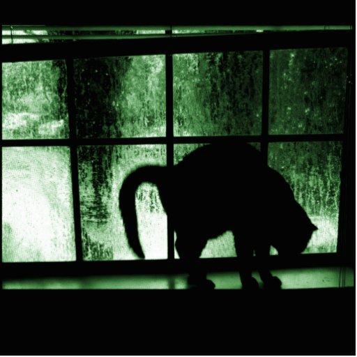 Octubre riega la silueta del gato en el verde de adorno fotoescultura