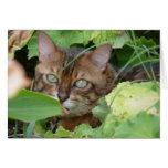 Ocultación en el jardín tarjeton