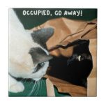 ¡Ocupado, salga! Gatos divertidos Teja Cerámica