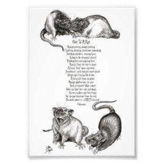 Oda a una impresión de la foto de la rata
