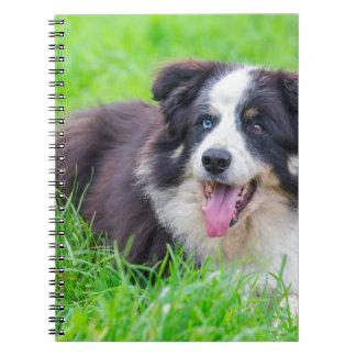 Odd eye border collie lying in  grass.JPG Notebook