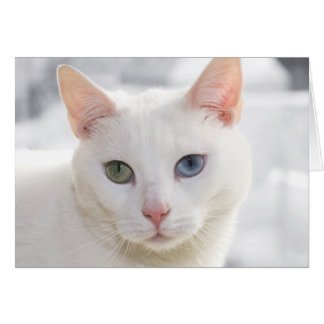 odd-eyed white cat close up face card