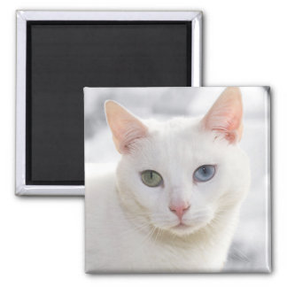 odd-eyed white cat close up face magnet