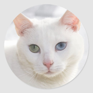 odd-eyed white cat close up face round stickers
