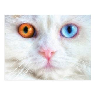 Odd-Eyed White Persian Cat Postcard