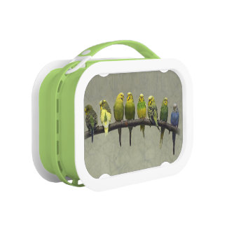 Odd One Out Lunchbox
