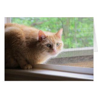 Odie Orange Cat Card