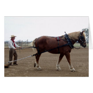 Odie the Belgian Horse driving Card