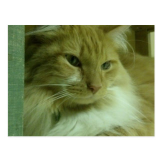 Odin the sweetheart Cat Card