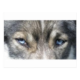 Odins eyes postcard