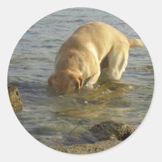 Odio lunes - Labrador con la cabeza debajo del Pegatina Redonda