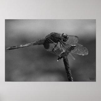 Odonata Poster
