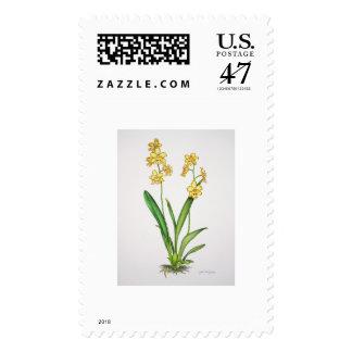 Odontonia Orchid Postage