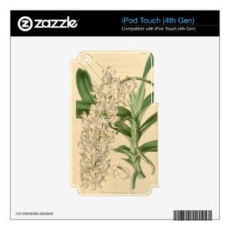 Odorata de Aerides (u odoratum) Calcomanías Para iPod Touch 4G