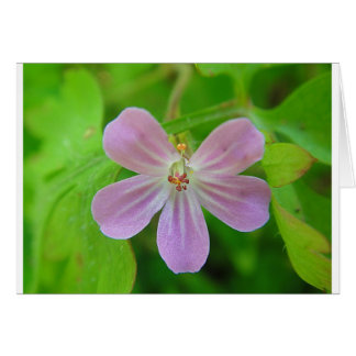 Of pink Weis touched stork bill bloom Greeting Card