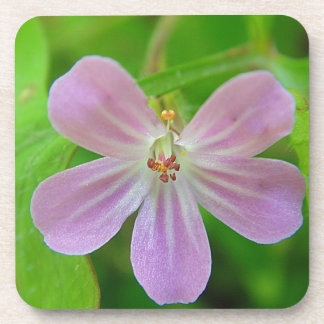 Of pink Weis touched stork bill bloom Beverage Coasters