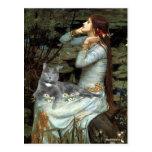 Ofelia - gato gris postal