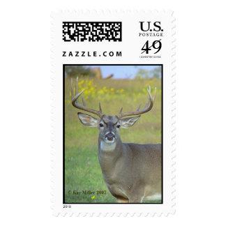 OFF LIMITS!,  Kay Miller 2007 Postage Stamp
