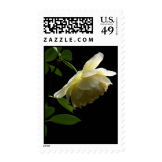 """Off-White Rose """"Innocence"""" Stamps"""