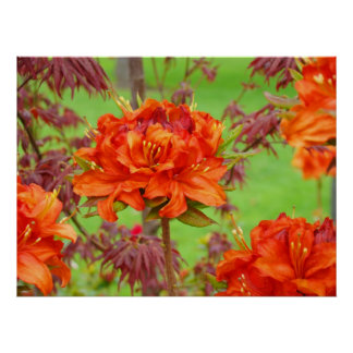 Office art prints Orange Rhododendron Garden Poster