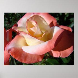 OFFICE ART ROSES Pink Rose Flowers 5 Art Prints Posters