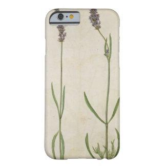 Officinalis del Lavandula (lavanda inglesa vieja), Funda Para iPhone 6 Barely There