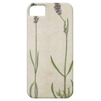 Officinalis del Lavandula (lavanda inglesa vieja), Funda Para iPhone 5 Barely There
