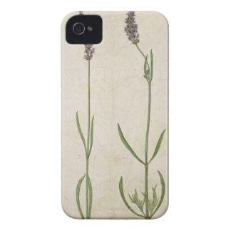 Officinalis del Lavandula (lavanda inglesa vieja), Case-Mate iPhone 4 Protectores
