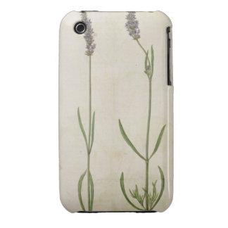 Officinalis del Lavandula (lavanda inglesa vieja), Case-Mate iPhone 3 Coberturas
