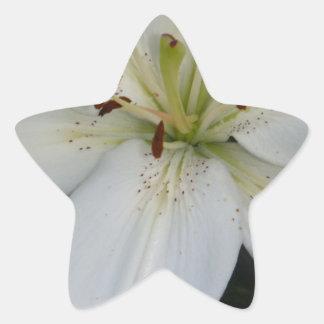 Offset White Lily Star Sticker