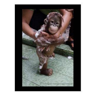 OFI Orangutan Orphan Rescue Baby Jackat Post Card