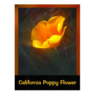 Ogange California Flower Postcard