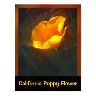 Ogange California Flower Postcard