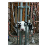 """""""Oh Cash!"""" Great Dane Puppy Greeting Card"""