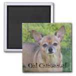 Oh! Chihuahua! Refrigerator Magnets