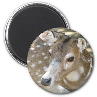 Oh Deer Magnet Refrigerator Magnets