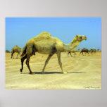 Oh día feliz - camellos en el desierto poster