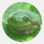 Oh día feliz - cierre de la rana verde para arriba etiquetas