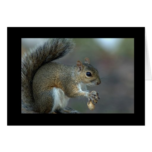 Oh nuts! card